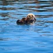 Sleepy Otter Poster
