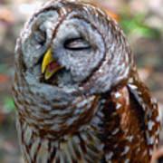 Sleepy Owl Poster
