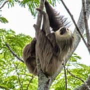 Sloth1 Poster