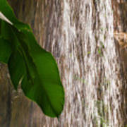 Slow Motion Tropical Waterfall Poster