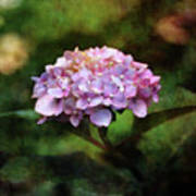 Small Blossoms 2388 Idp_2 Poster