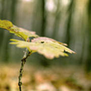 Small Branch With Yellow Leafs Close-up Poster