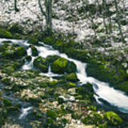Small River In Forest In Winter Poster