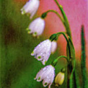 Small Signs Of Spring Poster