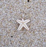 Small Star Fish Poster
