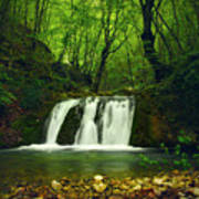 Small Waterfall In Forest Poster