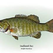 Smallmouth Bass Poster by Ralph Martens