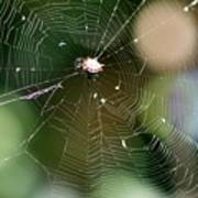 Smiley Spider Web  Poster