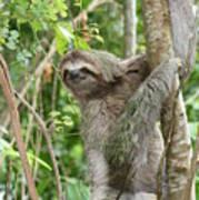 Smiling Sloth Poster