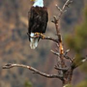 Smith Rock Bald Eagle Poster