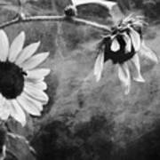 Smoking Sunflowers Poster