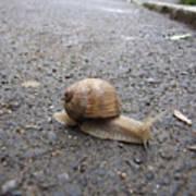 Snail 2 Poster