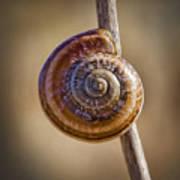 Snail On A Stick Poster