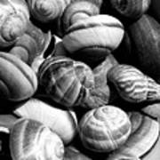 Snail Shells In Black And White Poster
