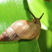 Snail Work B Poster