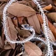 Snake Skeleton Poster