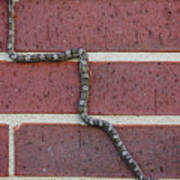 Snaking Up A Brick Wall Poster