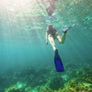 Snorkeling In Coral Reef Poster