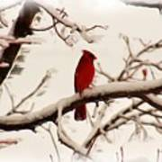 Snow Cardinal Poster by Janet Pugh