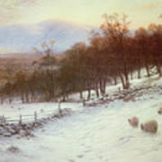Snow Covered Fields With Sheep Poster