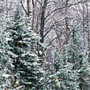 Snow-covered Forest, Wisconsin, Usa Poster