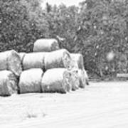 Snow Covered Hay Bales Poster