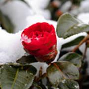 Snow Flower Poster