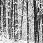 Snow In A Forest Poster