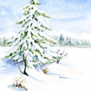 Snow On Evergreens Poster
