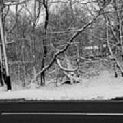 Snow On Fallen Tree Poster