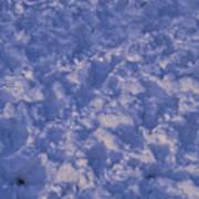 Snow Prints Poster