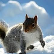 Snow Squirrel Poster