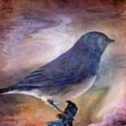 Snowbird Stories... Poster