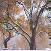 Snowy Autumn Landscape Poster by James BO  Insogna