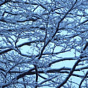 Snowy Branches Landscape Photograph Poster