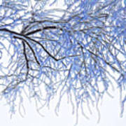Snowy Branches Poster