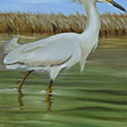 Snowy Egret 1 Poster
