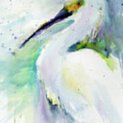 Snowy Egret On Lido Beach Poster