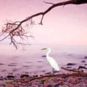 Snowy Egret Solitude Poster