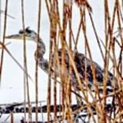 Snowy Heron? Poster