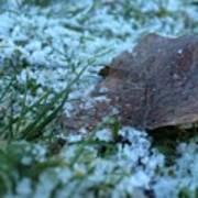 Snowy Leaf Poster