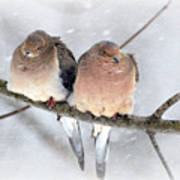 Snowy Mourning Dove Pair Poster