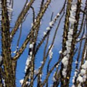 Snowy Ocotillo Sky Poster