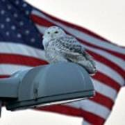 Snowy Owl And Am Flag Poster