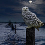 Snowy Owl On A Winter Night Poster
