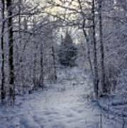 Snowy Path Poster