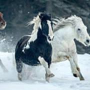 Snowy Run Poster
