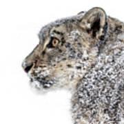 Snowy Snow Leopard Poster