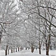 Snowy Treeline Poster