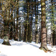 Snowy Wilderness Poster